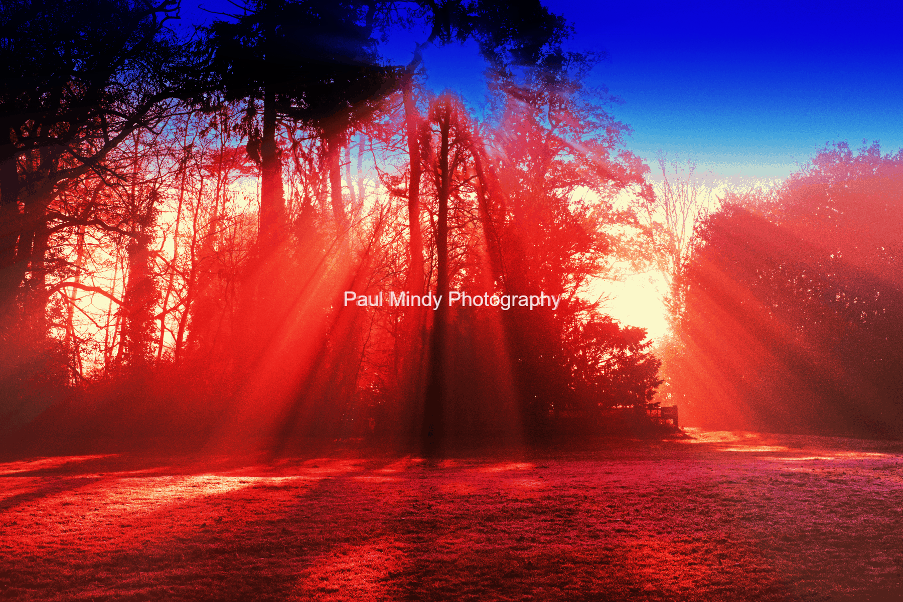 Sandringham-The-Foggy-Red-Trees-Paul-Mindy-Photography