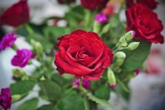 Single-Rose-Paul-Mindy-Photography_compressed-this-2